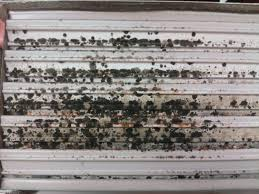 Mold in an AC Unit